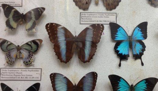 [タイ]チェンマイの昆虫博物館で一生分の昆虫を見てきた。